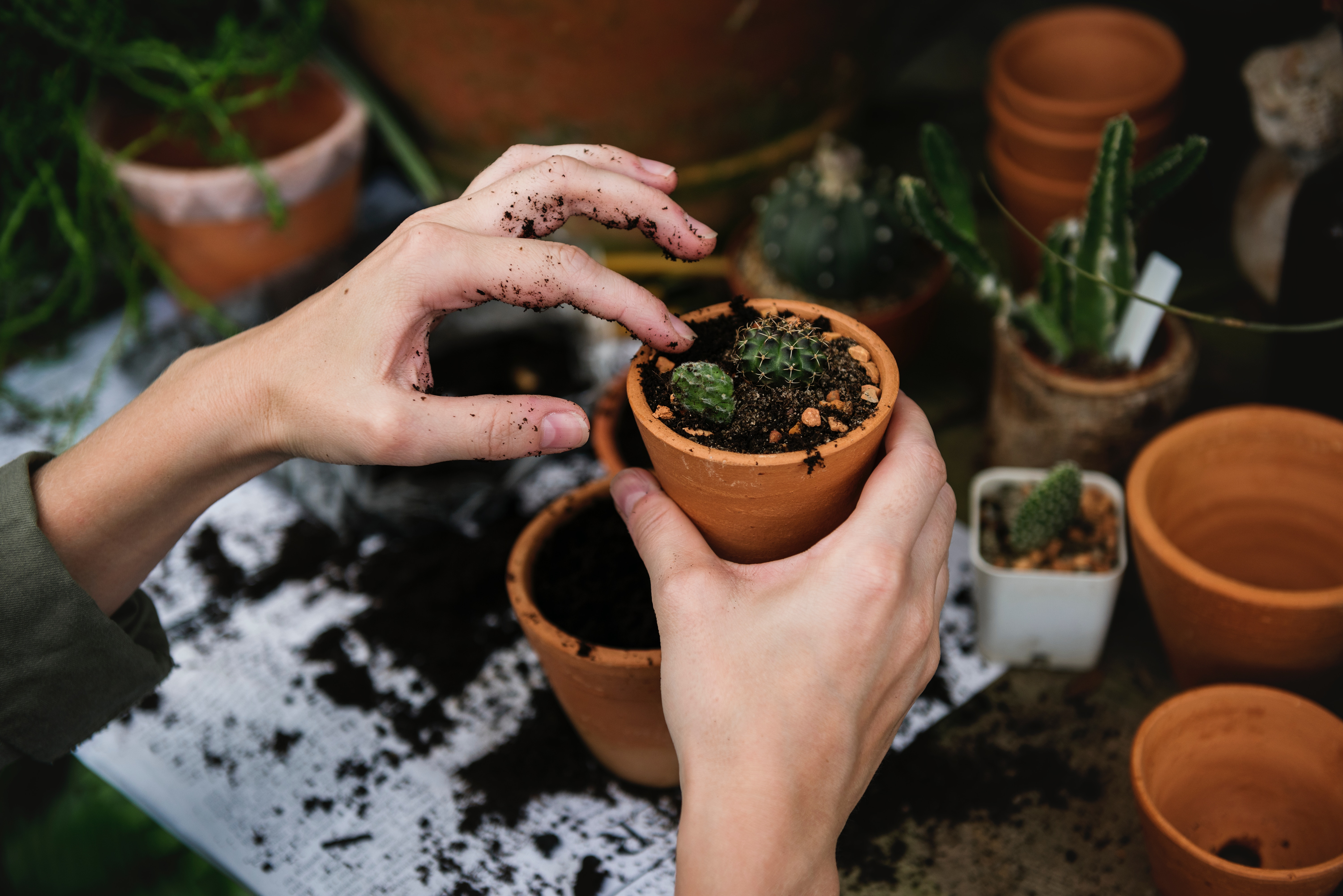 picture of hands potting plants for GARDEN  Club activity