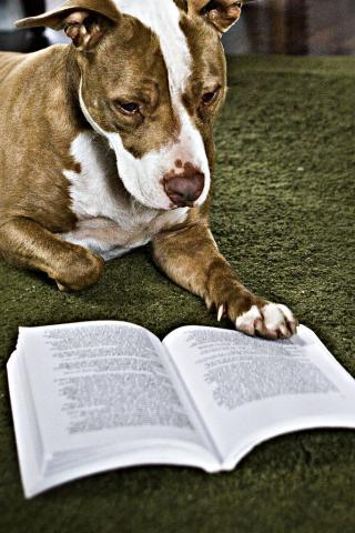 Dog reading a book.